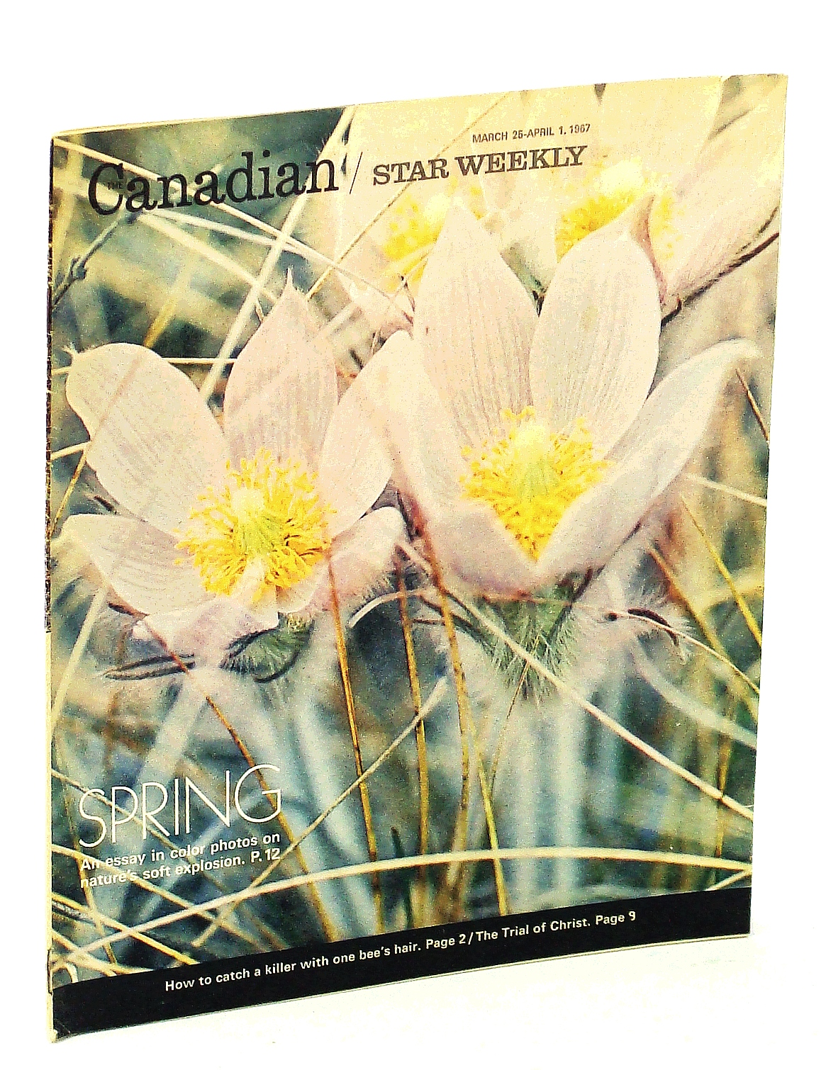 Image for Canadian Star Weekly [Magazine], March 25 - April 1, 1967: Doug Hepburn / RCMP Crime Labs